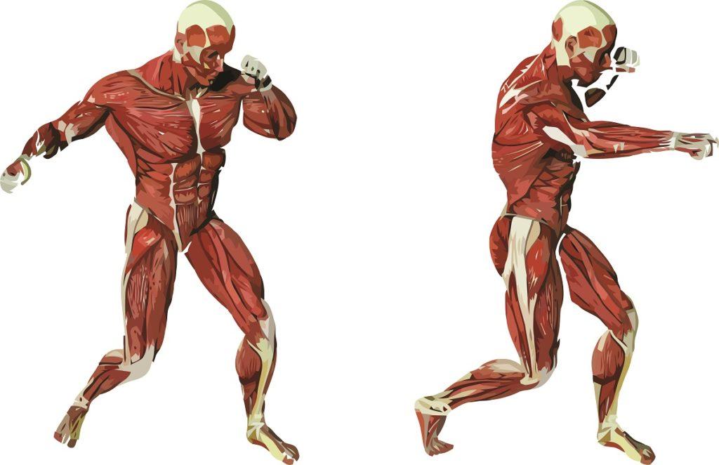 мышцы и двигательные навыки